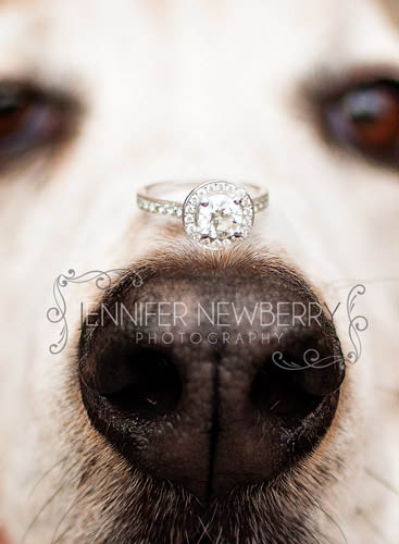 Newmarket engagement ring on dog's nose - www.jnphotography.ca @filemanager
