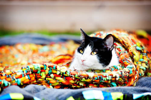 Newmarket cat wrapped up in a blanket - www.jnphotography.ca @filemanager