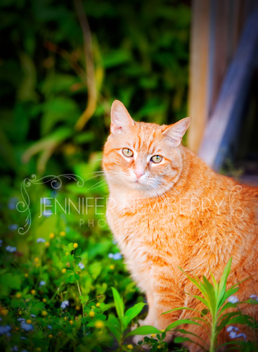 Orange cat Riley by www.jnphotography.ca @filemanager