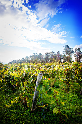 Holland Marsh Winery by www.jnphotography.ca @filemanager