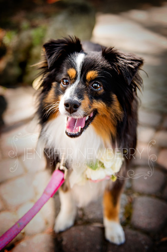 Wedding dog by www.jnphotography.ca @filemanager