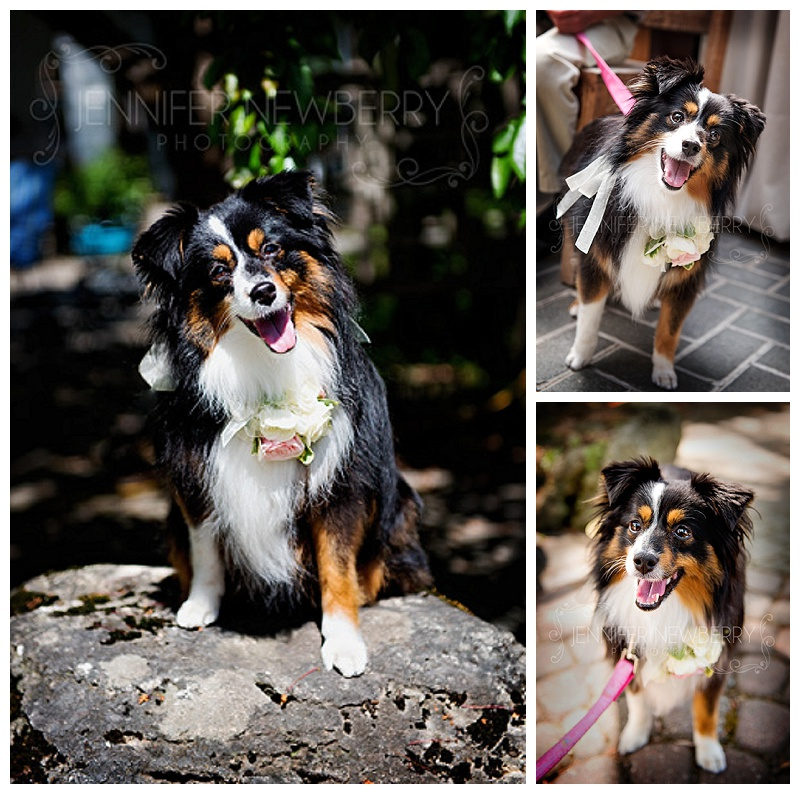 Madsen's Newmarket Wedding Dog by www.jnphotography.ca @filemanager